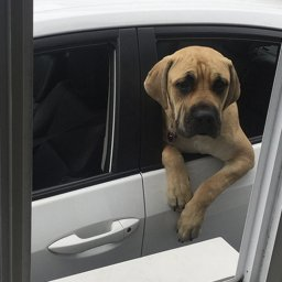 dogs at drive throughs