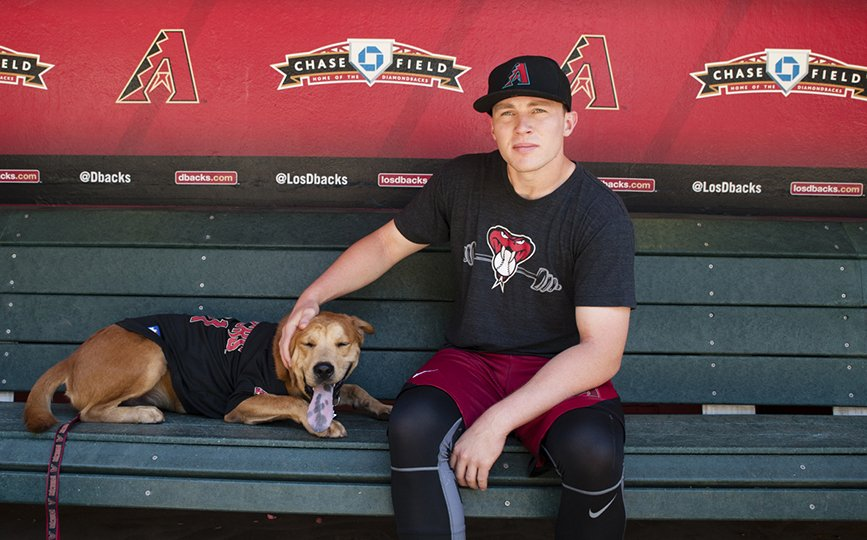 Arizona-Diamondback-Drury-Dogs