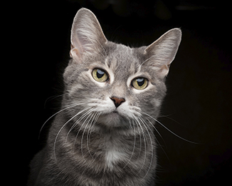 Scottsdale Cat Photography