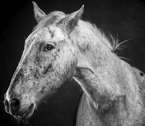 Horse Photography in Scottsdale, Arizona
