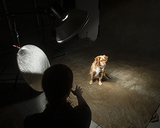 Arizona Pet Photography
