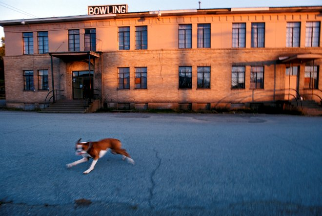 A pit bull runs the main street in downtown Kellogg, Id.