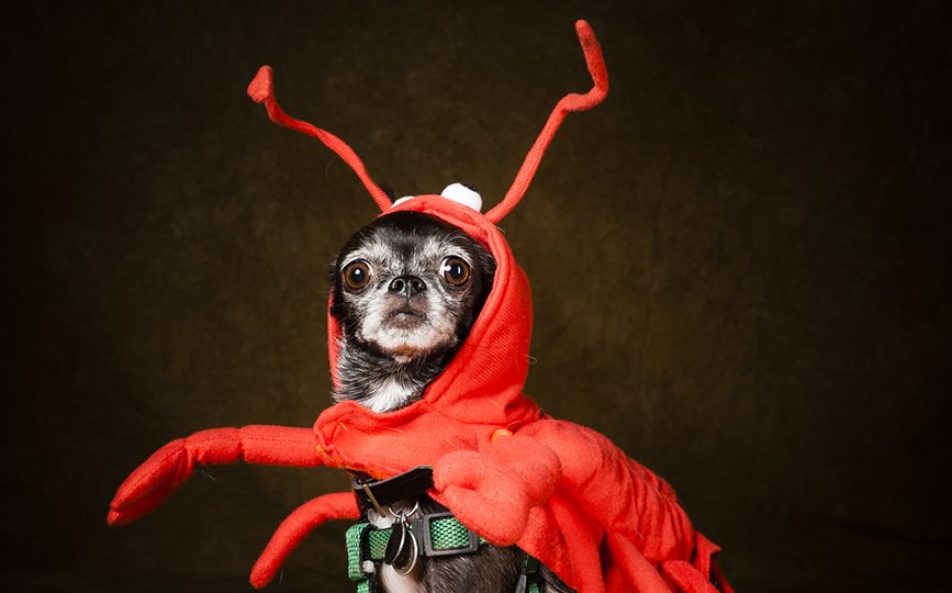 dog-costumes-Arizona-Dog-Photography-12