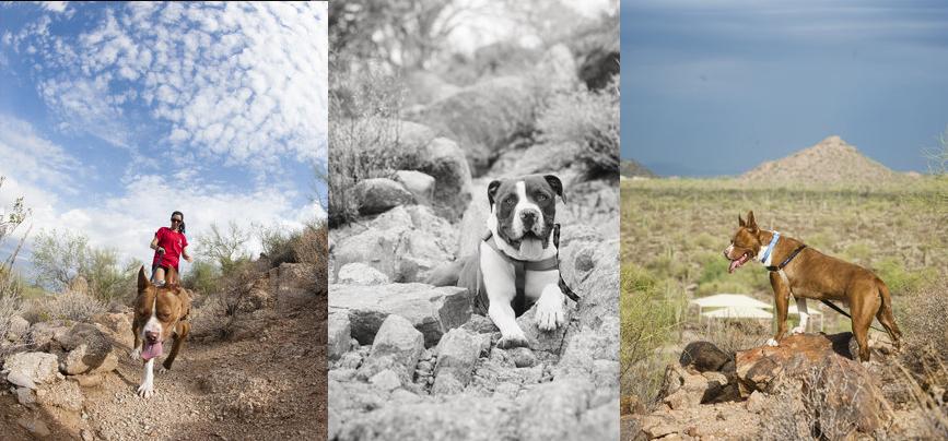 Arizona Dog Photography-Hiking