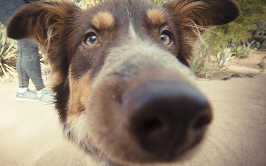 Dog-Photography