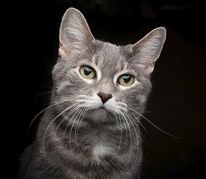 Scottsdale Cat Photography
