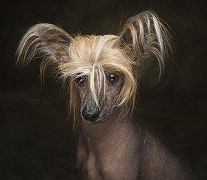 Arizona Pet Photography Gift Certificiate