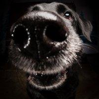Arizona Pet Photography and Labrador Dog Portraits
