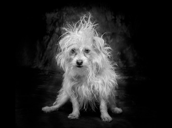 Arizona Pet Photography and Terrier Mix Dog Portraits