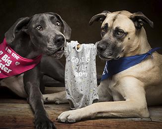 Scottsdale Arizona Dog Photography