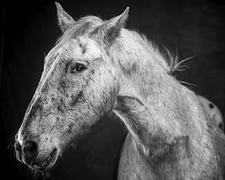 Horse Photography in Scottsdale, Arizona