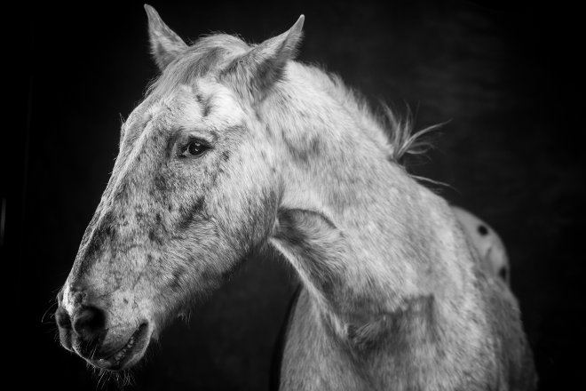 Arizona Horse Photography and Pet Portraiture