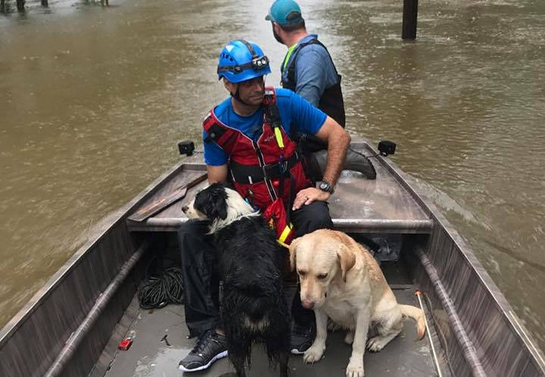 How-to-Help-Dogs-in-Harvey