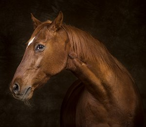 Arizona Horse Photographer