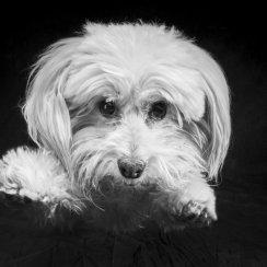 Dog Photography, Pet Photography, Animal Photography, Cat Photog
